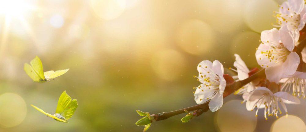 Imperial Feng Shui - Schmetterlinge und Blüten